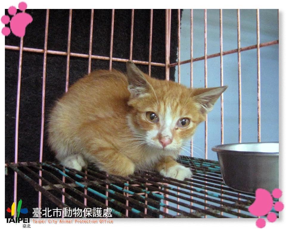 2015台北可爱动物暨宠物用品博览会
