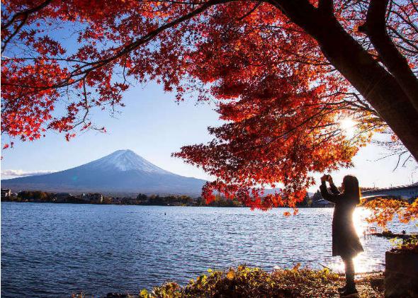 【雙11特別篇】單身萬歲! 一個人的東京旅行提案 : 住宿/ 美食/ 旅程的介紹