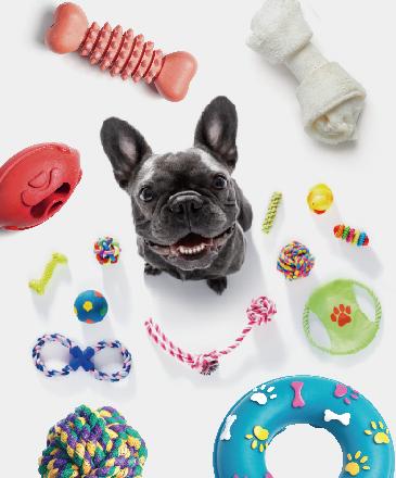 狗狗趣味賽